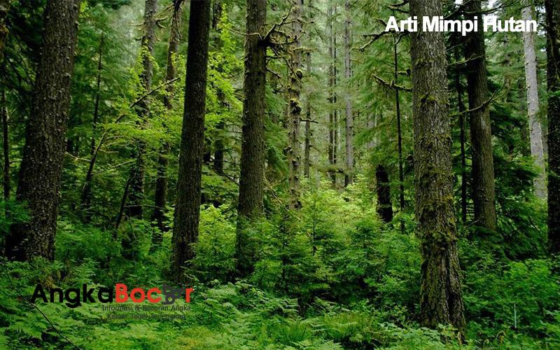 Kumpulan arti mimpi hutan
